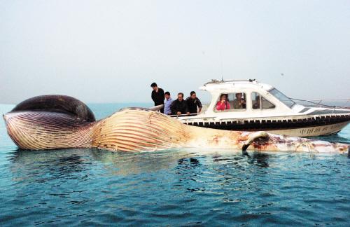 新华社南宁3月7日电 (记者 梁思奇)  广西北海市一艘渔船日前从海南