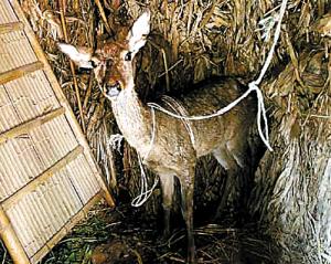 獨鹿水中泥