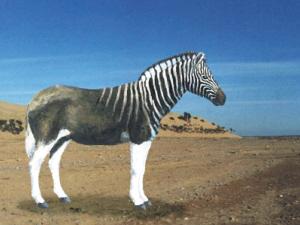 斑驴:1883年灭绝.