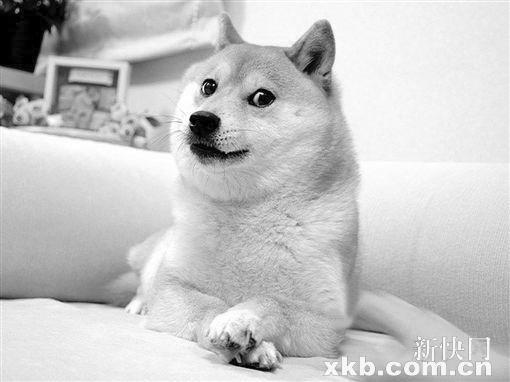 doge神烦狗表情; ps恶搞新闻素材; 欧美女生头像大图