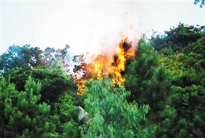 森林着火简笔画分享展示