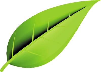 背景 壁纸 绿色 绿叶 设计 矢量 矢量图 树叶 素材 植物 桌面 400_283