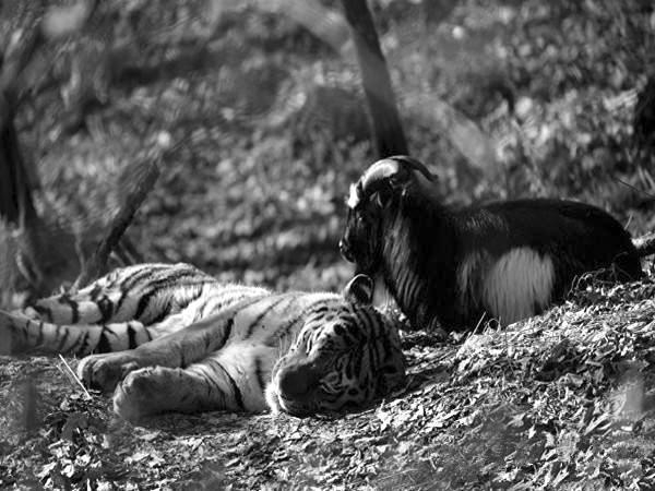 野生动物的日常 微盘