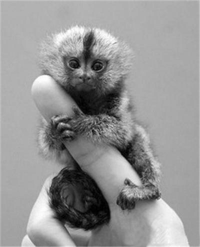 可爱的真猴子图片