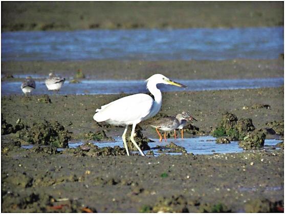 """海南鸟种又""""上新""""啦!全球濒危鸟类白肩雕首次在海南被拍到"""